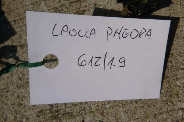 Lancia Phedra Budiky 2.2diesel